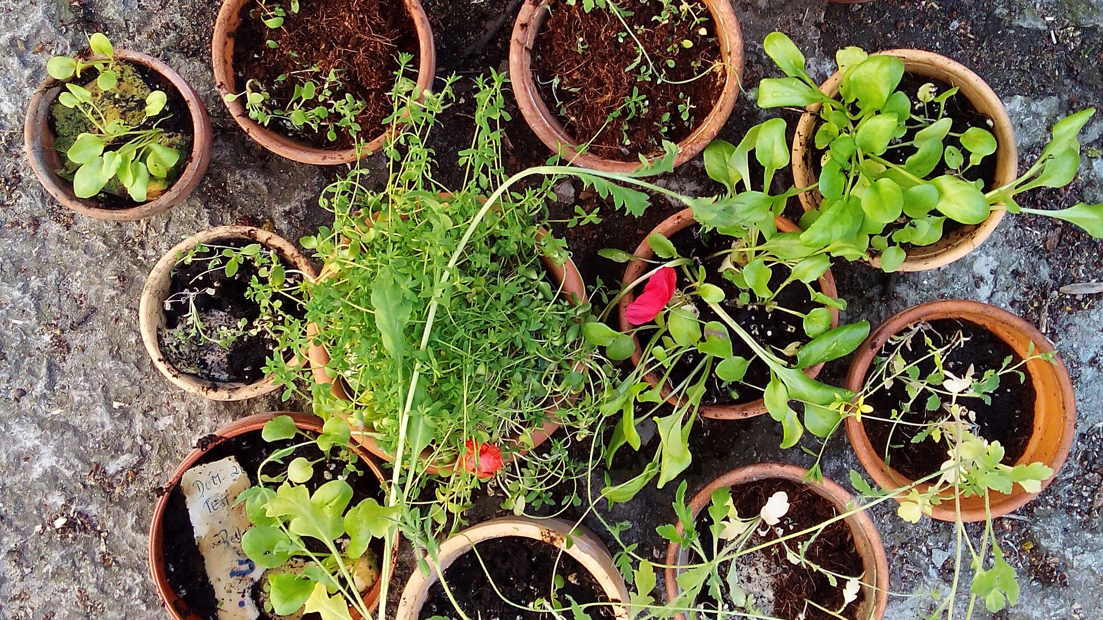 growing seed paper in pots