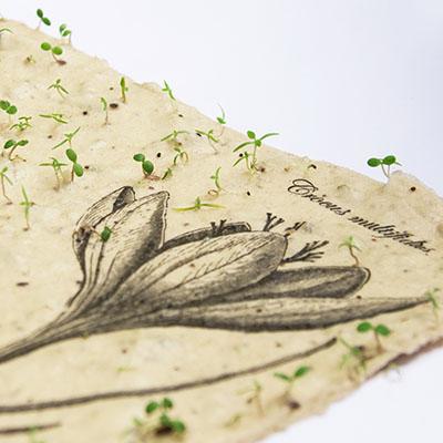 Seemnekaardid
