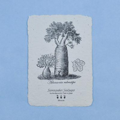 Adansonia Rubrostipa postcard seedcard