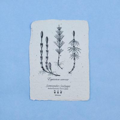 Equisetum Arvense postcard seedcard