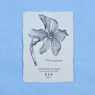 Narcissus Poeticus postcard seedcard