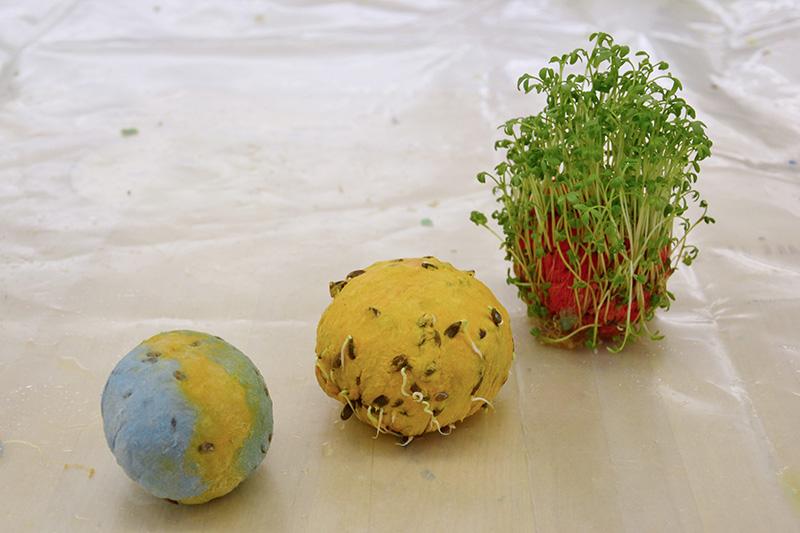 Seed Bombs!
