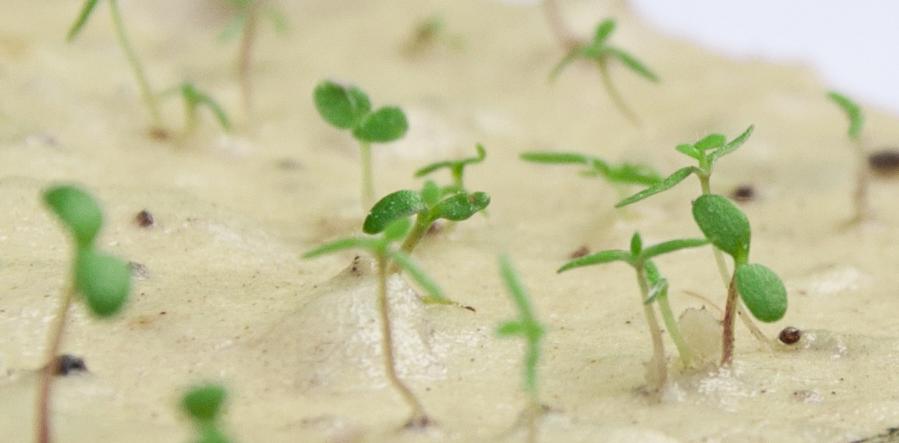 Võida 5 Labora seemnekaarti oma valikul!