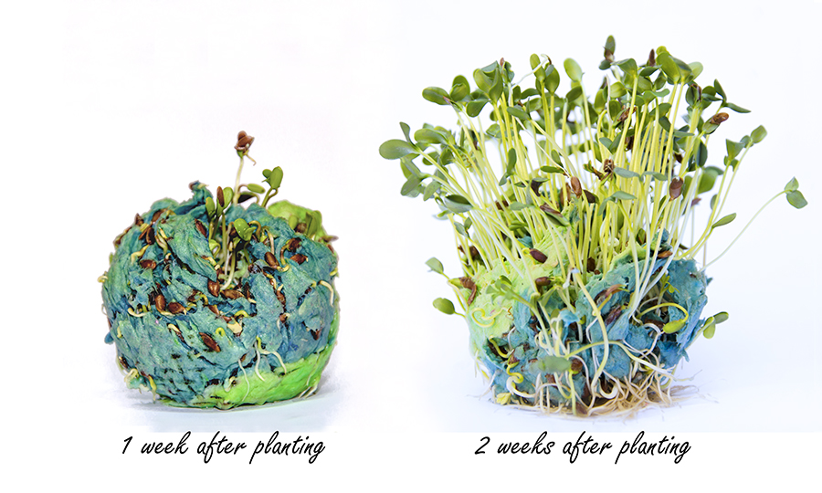 seed bomb growing