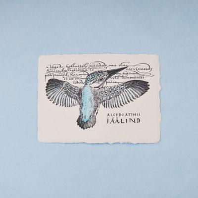 Jäälind Postkaart