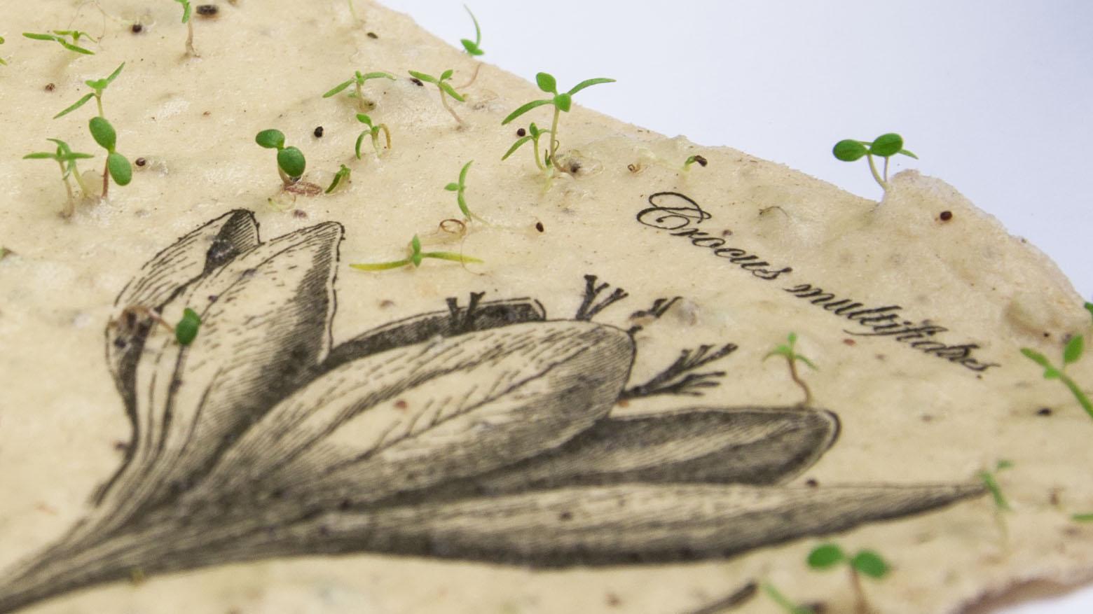 Seed Paper Labora