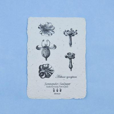 Aethusa cynapium postcard seedcard