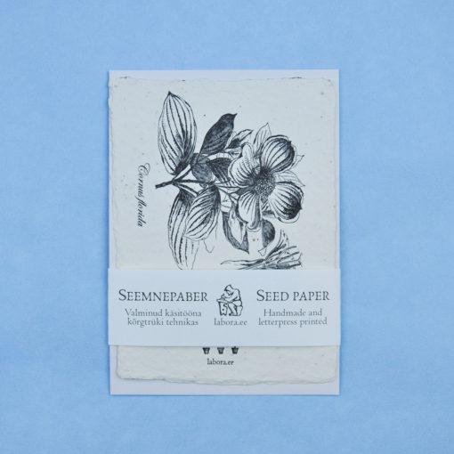 Cornus Florida postcard seedcard