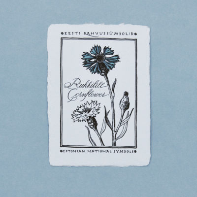Cornflower Postcard