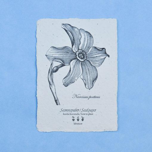 Narcissus Poeticus seedcard postcard