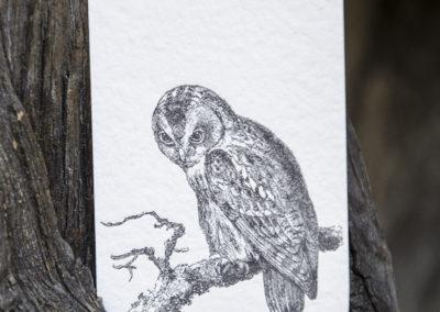 Business Card Owl
