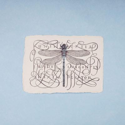 Emperor dragonfly illustration postcard