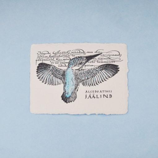 Kingfisher illustration postcard