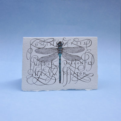 Dragonfly Postcard Greeting card