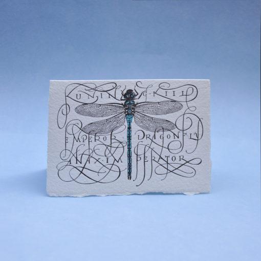 Dragonfly Postcard Greeting card