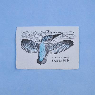 Kingfisher Postcard Greeting Card