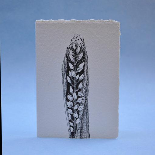Narrow-Leaved Helleborine Postcard Greeting card